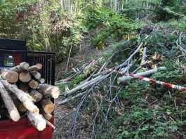 Rubano legname a Rota Greca, denunciati