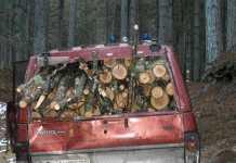 Furto di legna Cotronei
