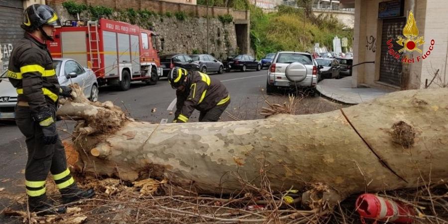 albero abbatuto catanzaro maltempo