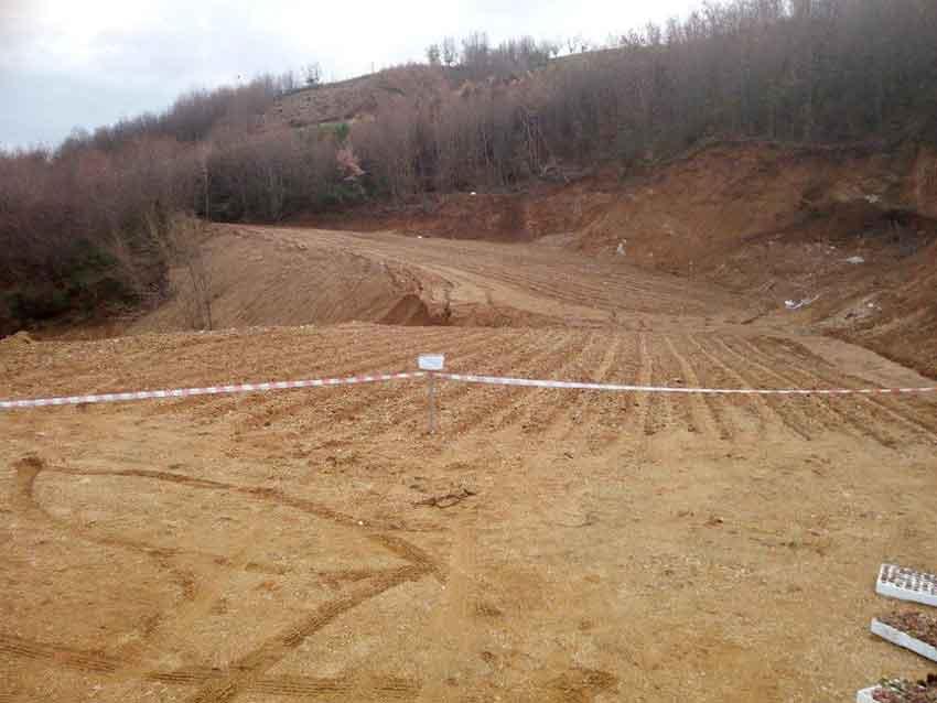 Taglia un bosco per ricavarci un terreno: sequestro e denuncia a Luzzi