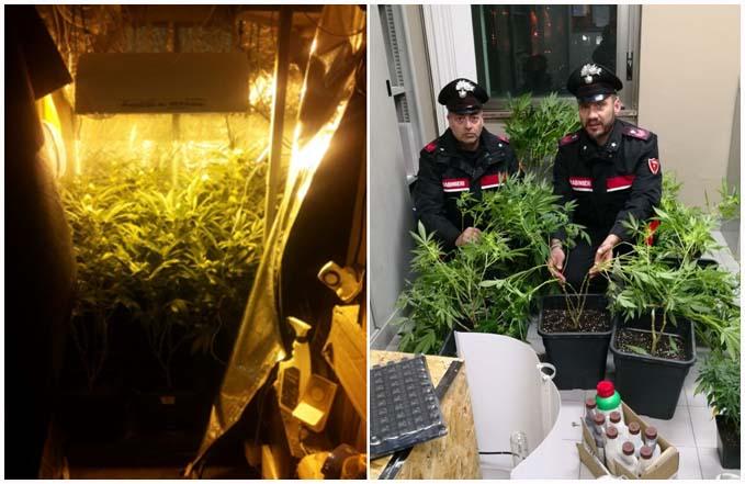 carabinieri serra marijuana paola