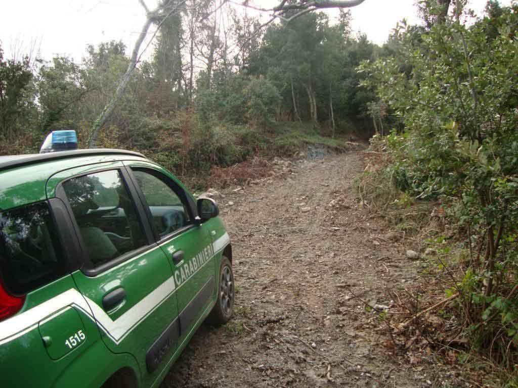 cc forestali strada abusiva bosco san nicola arcella