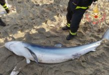 squalo spiaggiato catanzaro lido
