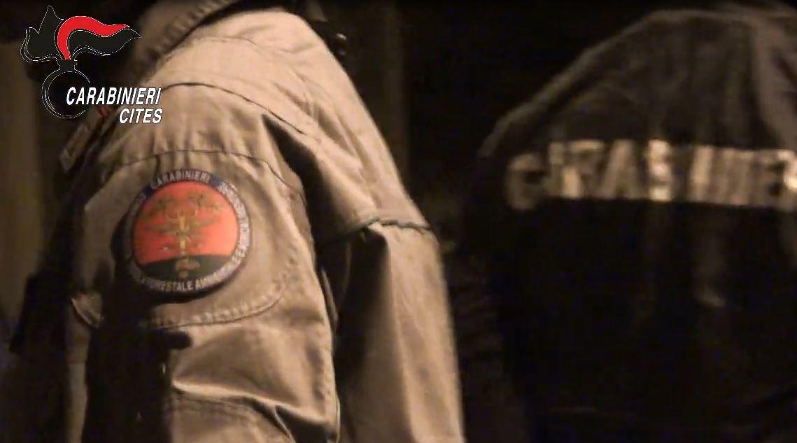 Bracconaggio, sgominata banda nel Reggino: 7 arresti
