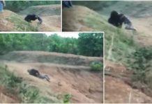 Una sequenza del video orso sbrana uomo