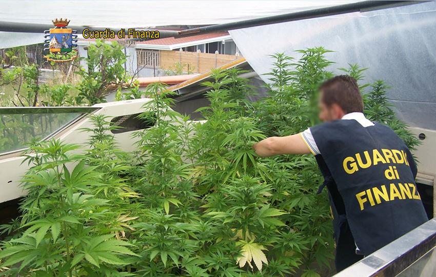 guardia di finanza marijuana serra