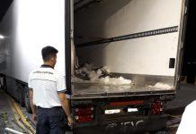 Guardia costiera sequestra 10 tonnellate di tonno rosso a Villa San Giovanni