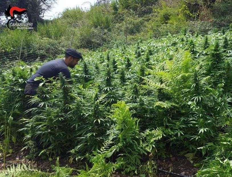 piantagione marijuana carabinieri