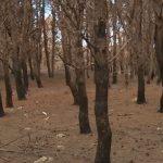 La pineta distrutta a Crotone