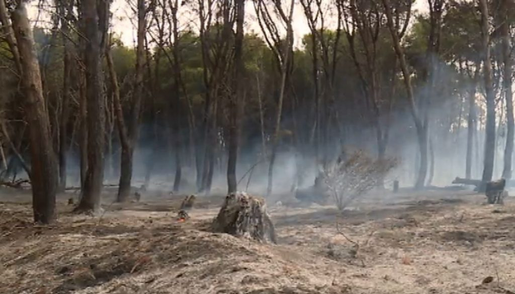 La pineta distrutta a Croton