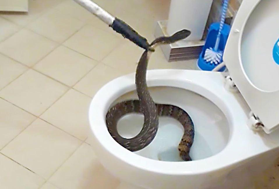serpente water bagno