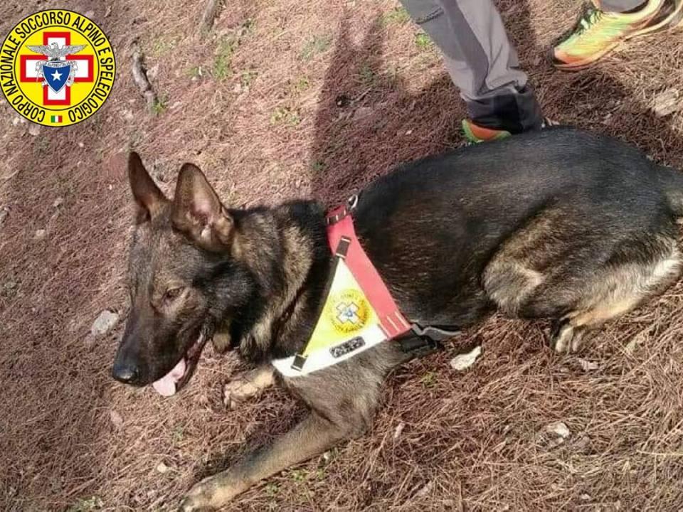 """""""Full"""", il cane del Soccorso alpino Calabria"""