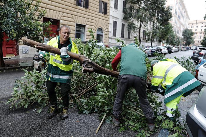 Interventi su alberi e rami caduti nel quartiere Prati a Roma
