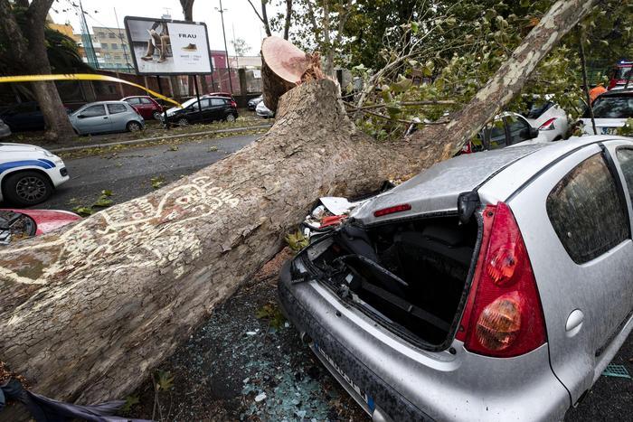 maltempo, danni, allagamenti, alberi caduti su auto