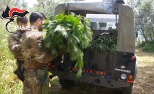 piantagione marijuana cacciatori