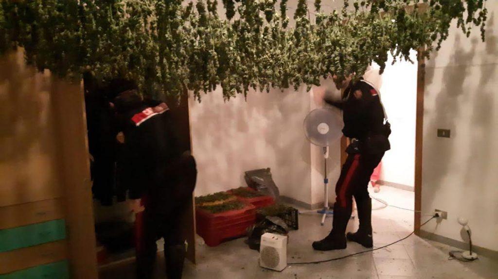 marijuana San Ferdinando