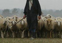 pastore gregge pecora