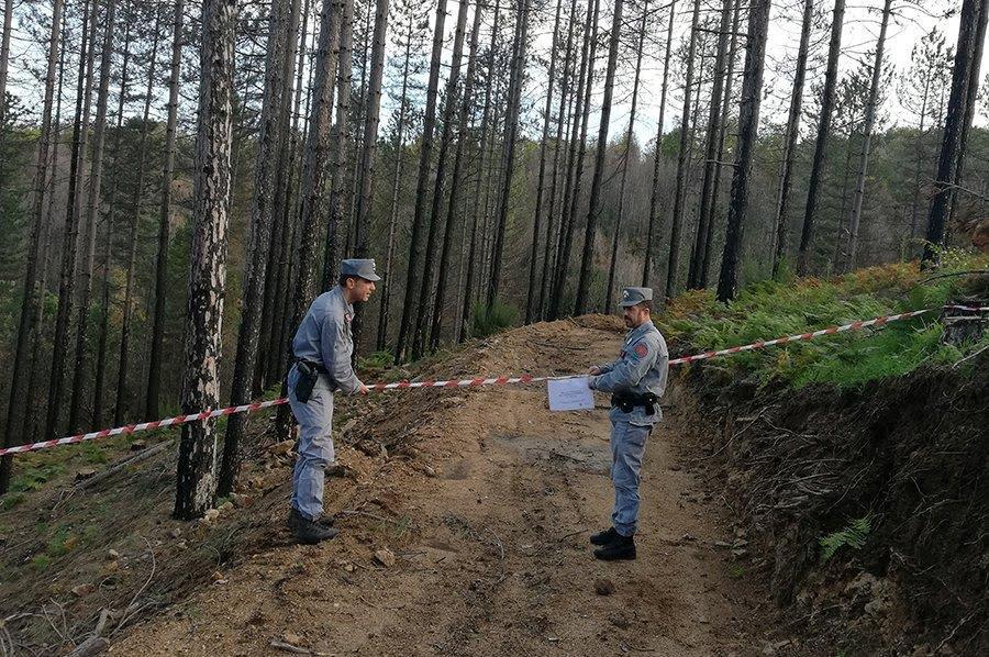 sequestro bosco