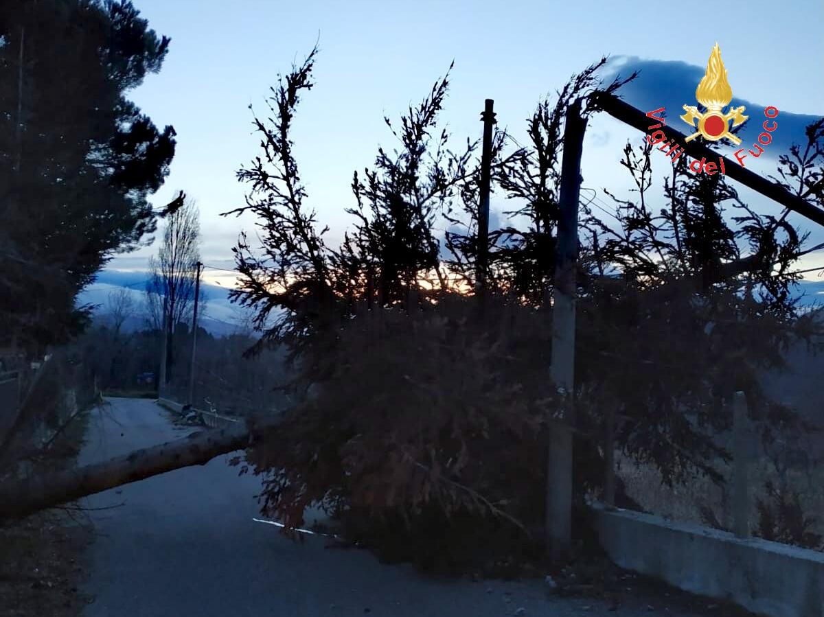albero caduto vigili del fuoco