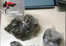 marijuana belvedere spinello