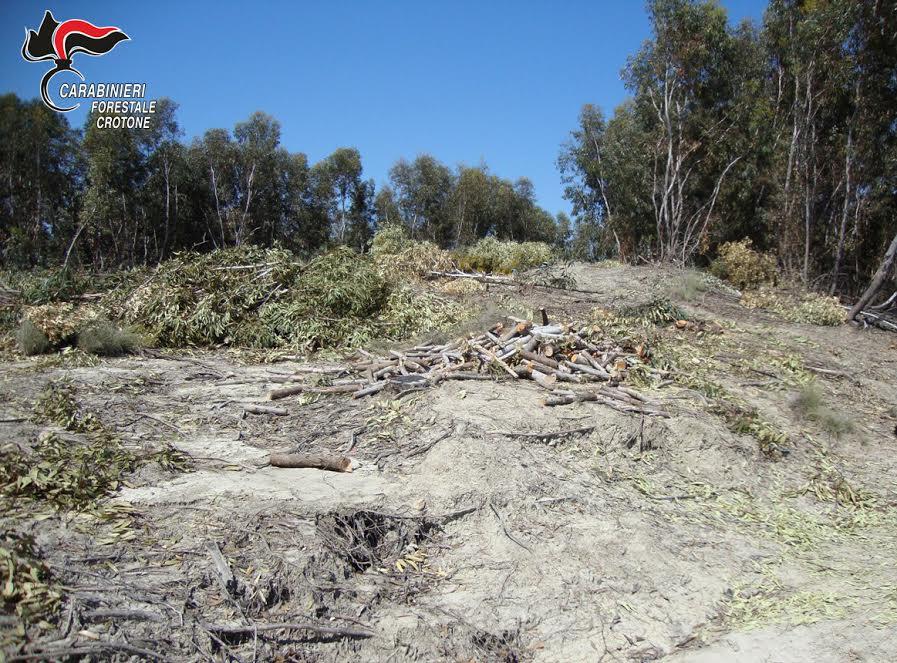 taglio alberi arsac