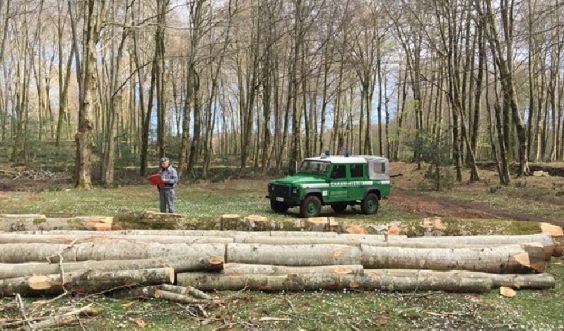 taglio alberi