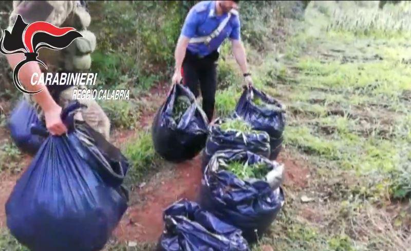 Sorpresi in una piantagione di canapa indiana, 4 arresti a Taurianova